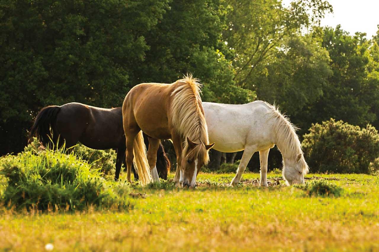 san horses 1280x853